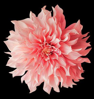 comm-flower-rich